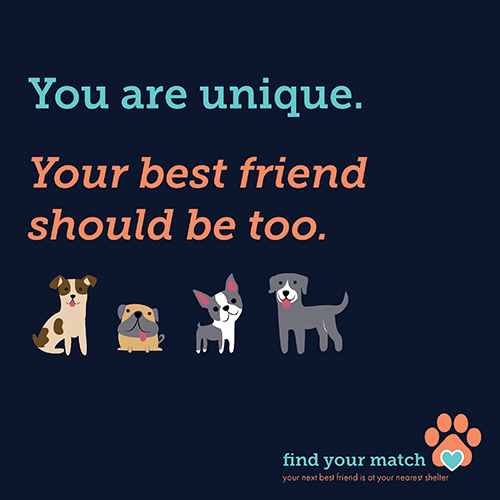 <i>Find Your Match</i>